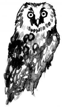 lehtopöllö, Strix aluco