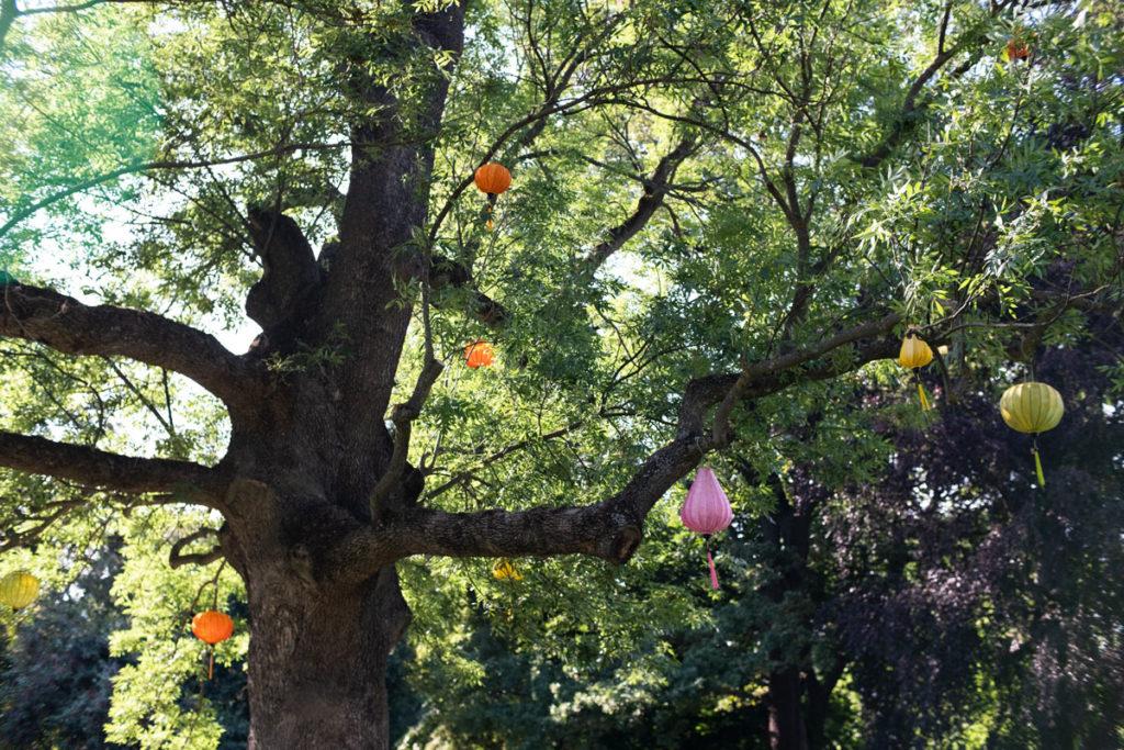 Kungsträdgårdenissa puut oli koristeltu kiinalaisilla lyhdyillä