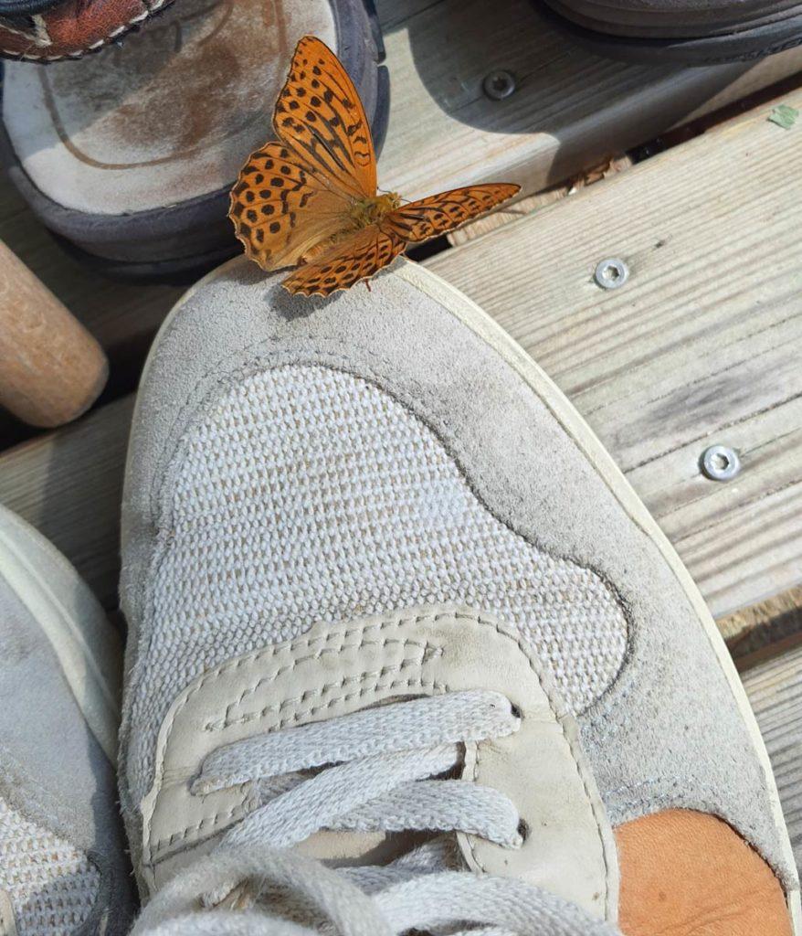 Keisarinviitta kengällä – AILI